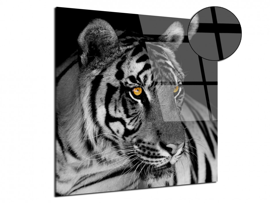 Tableau plexiglas photo le Tigre Blanc
