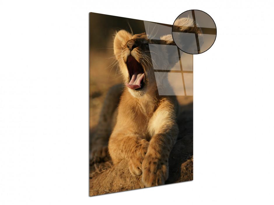 Tableau plexiglas le lionceau au réveil