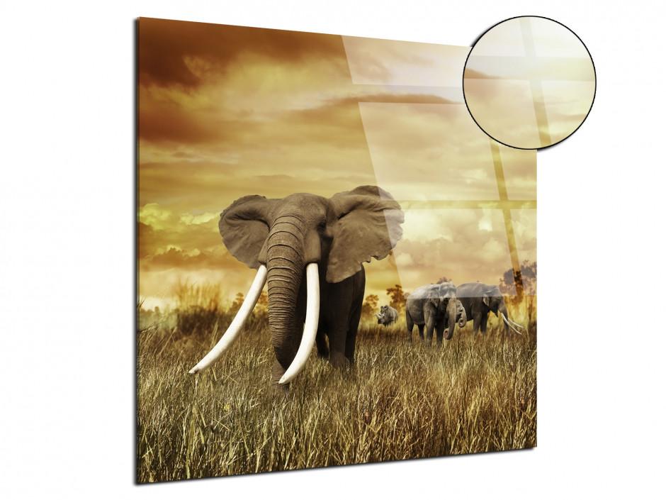 Tableau plexiglas l'éléphant verre acrylique