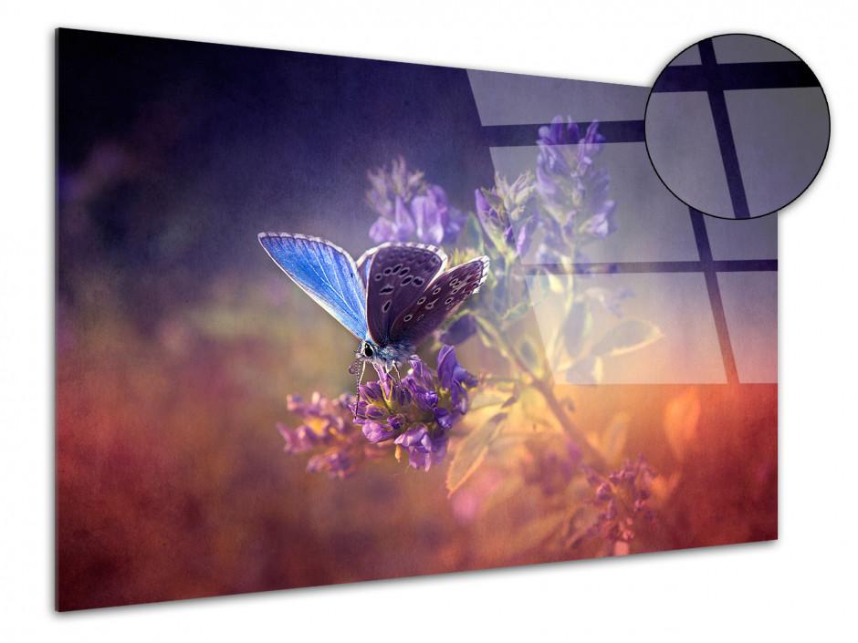 Tableau plexiglas décoratif Papillons colorés