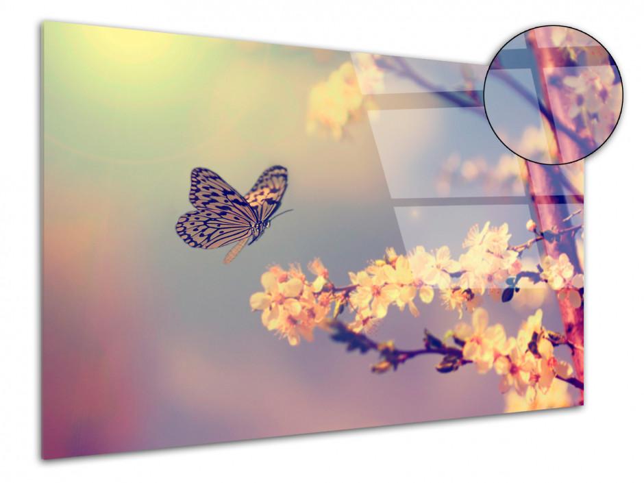Cadre plexiglas déco photo Papillons