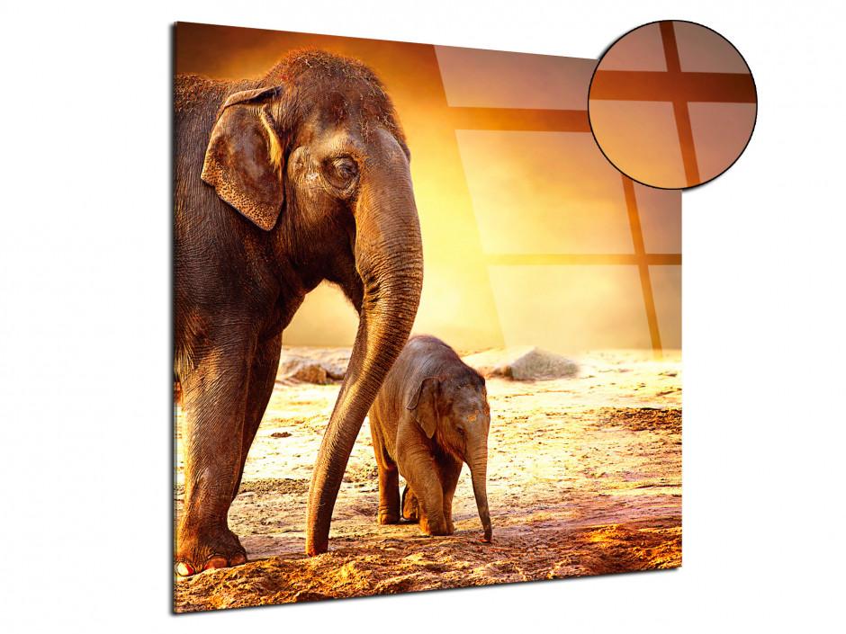 Tableau plexiglas décorative l'éléphanteau et sa maman