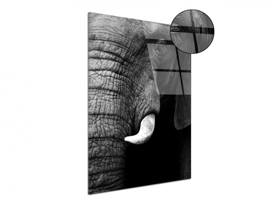Tableau plexiglas original éléphant
