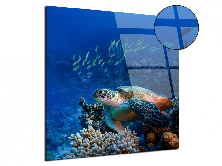 Tableau Tortue plexiglas décorative