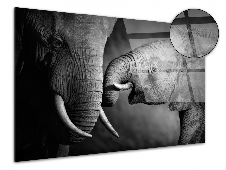 Tableau plexiglas déco photo  L'éléphant et sa mére