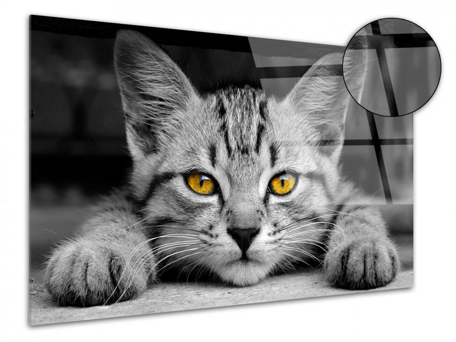 Tableau plexiglas décoratif Le petit Chat