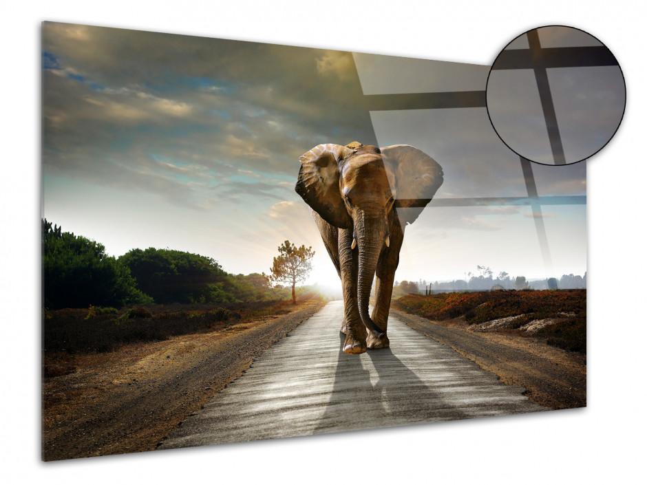 Tableau plexiglas décoratif Eléphant