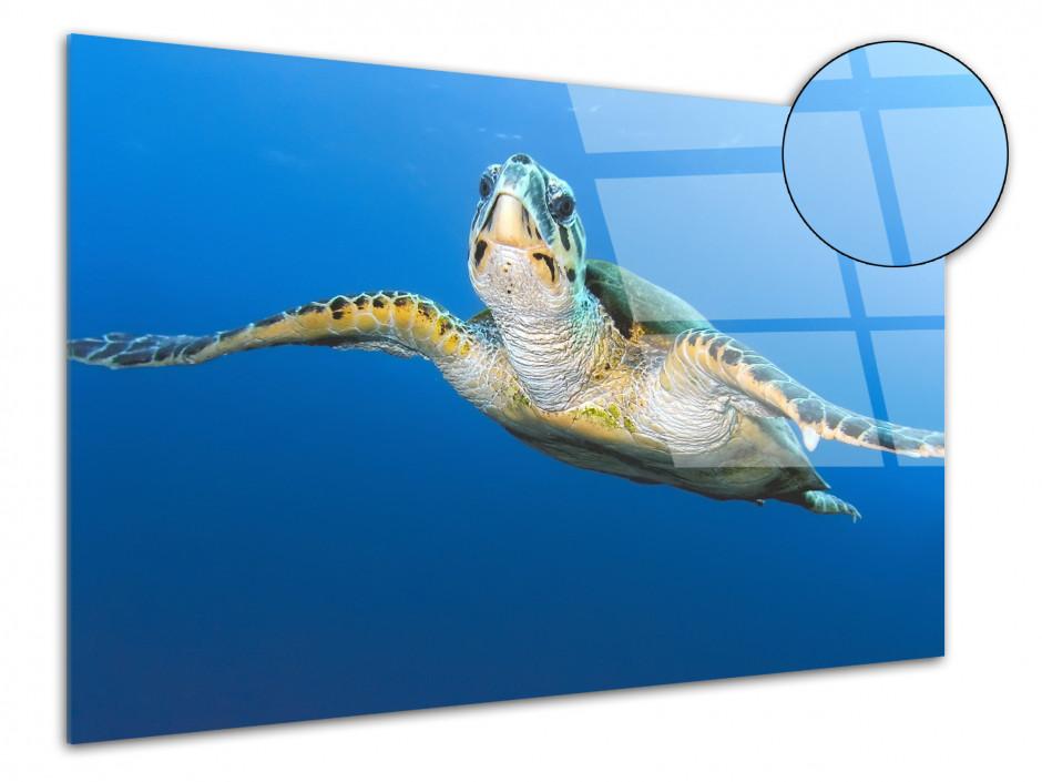 Tableau plexiglas deco Tortue Marine