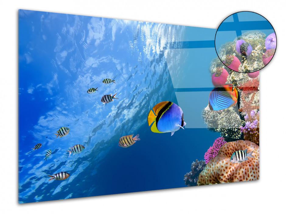 Tableau plexiglas décoratif Le monde sous marin