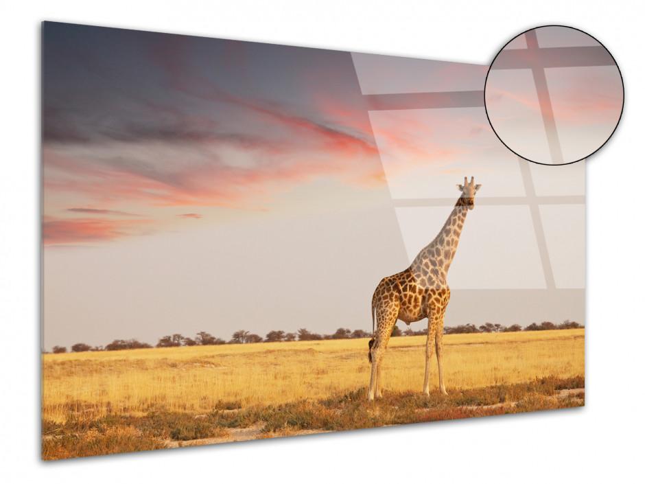 Tableau plexiglas déco les animaux de la Savanne