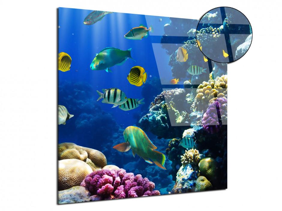 Tableau plexiglas le monde de Nemo
