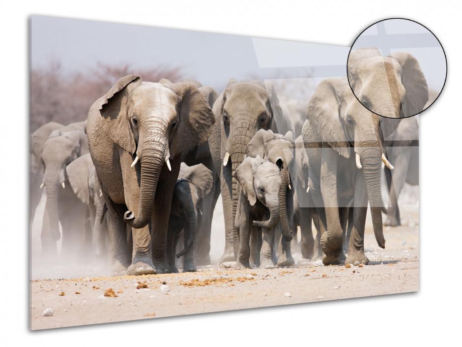 Tableau plexiglas décoration murale les Eléphants