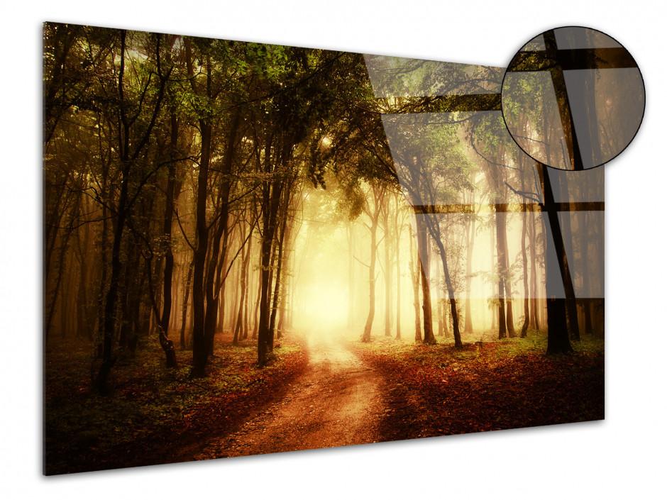 Tableau plexiglas photo paysage COUCHER DE SOLEIL EN FORET