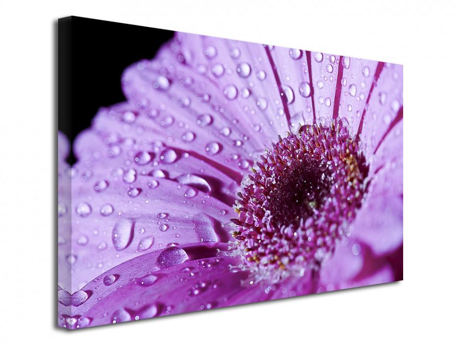 Tableau toile décorative Fleur Gerbera