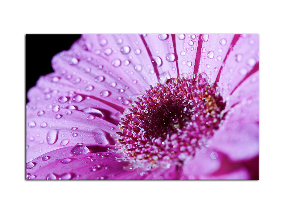Tableau plexiglas décorative Fleur Gerbera