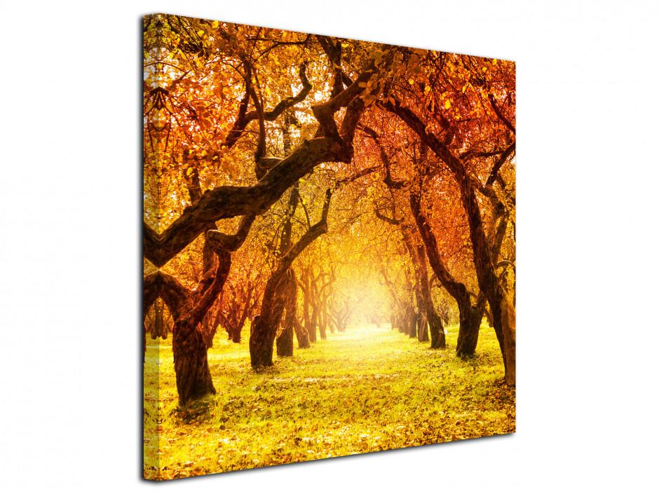 Tableau photo carré paysage d'automne