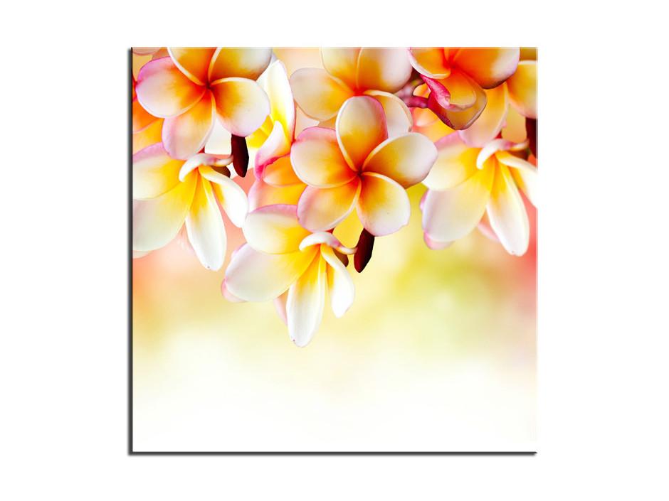 Tableau déco Aluminium fleurs Frangipanier
