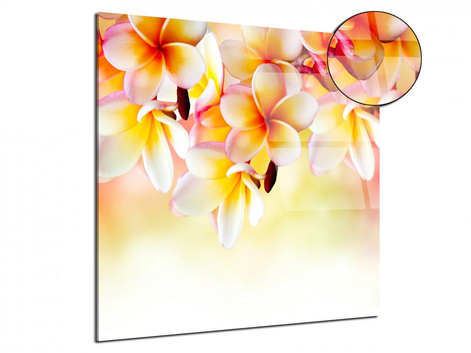 Tableau déco plexiglas fleurs Frangipanier