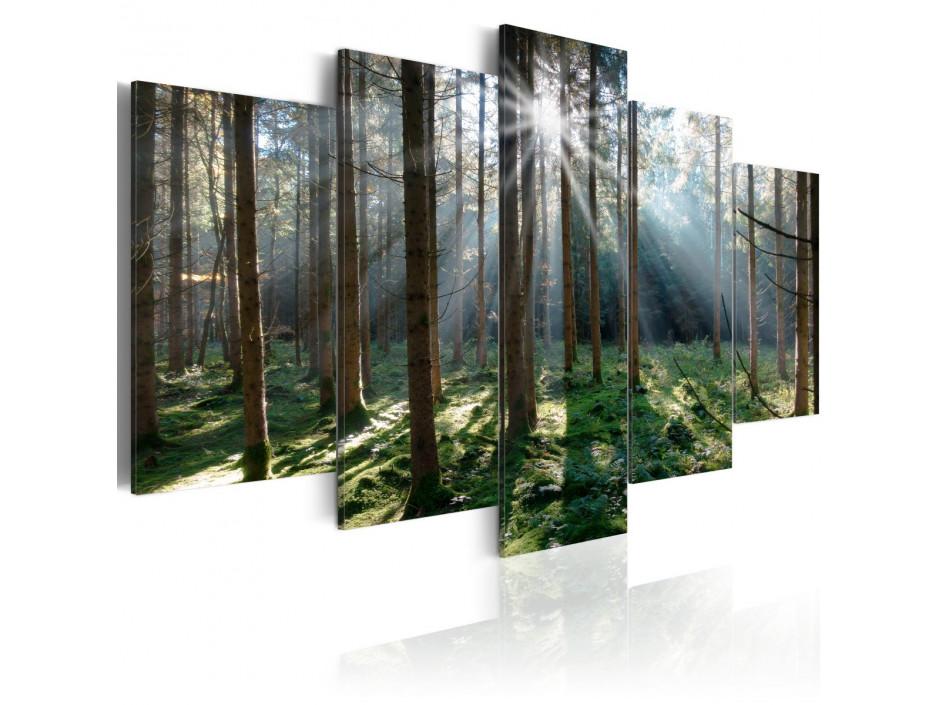 Tableau  Fairytale Forest