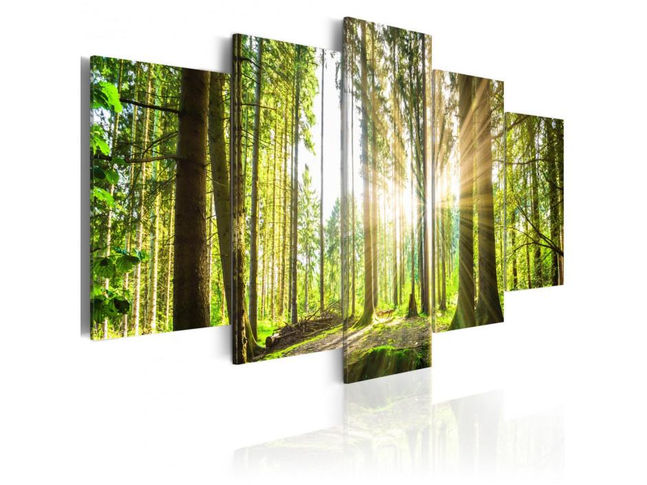 Tableau - Forest Kingdom