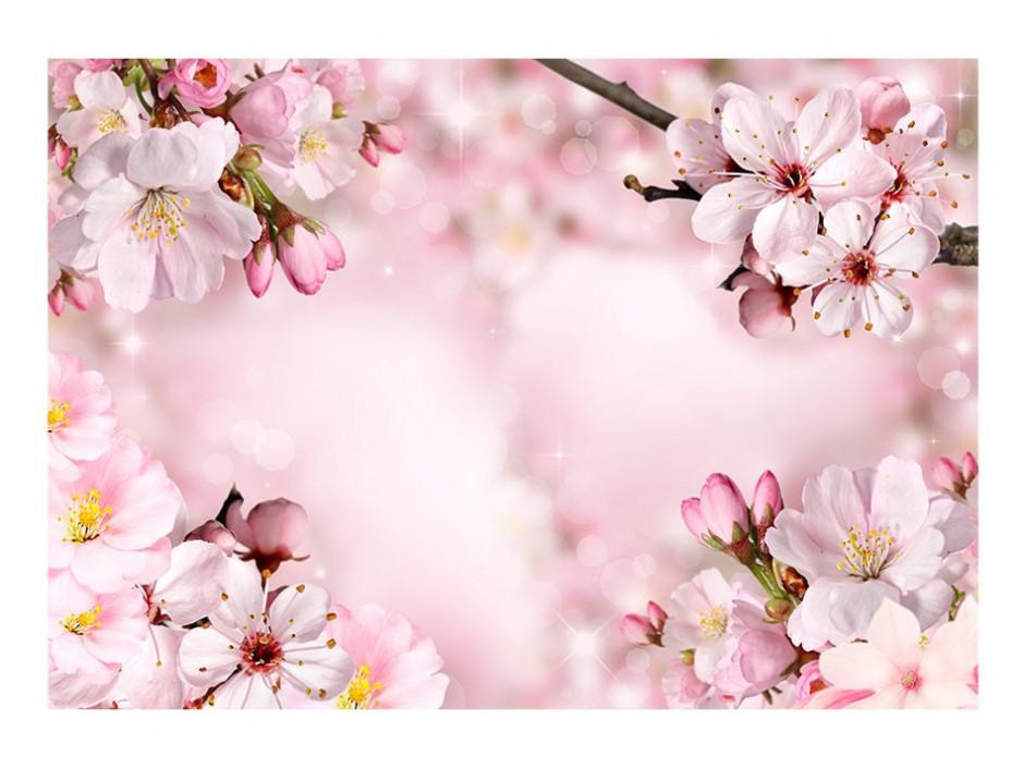 Papier peint  Spring Cherry Blossom