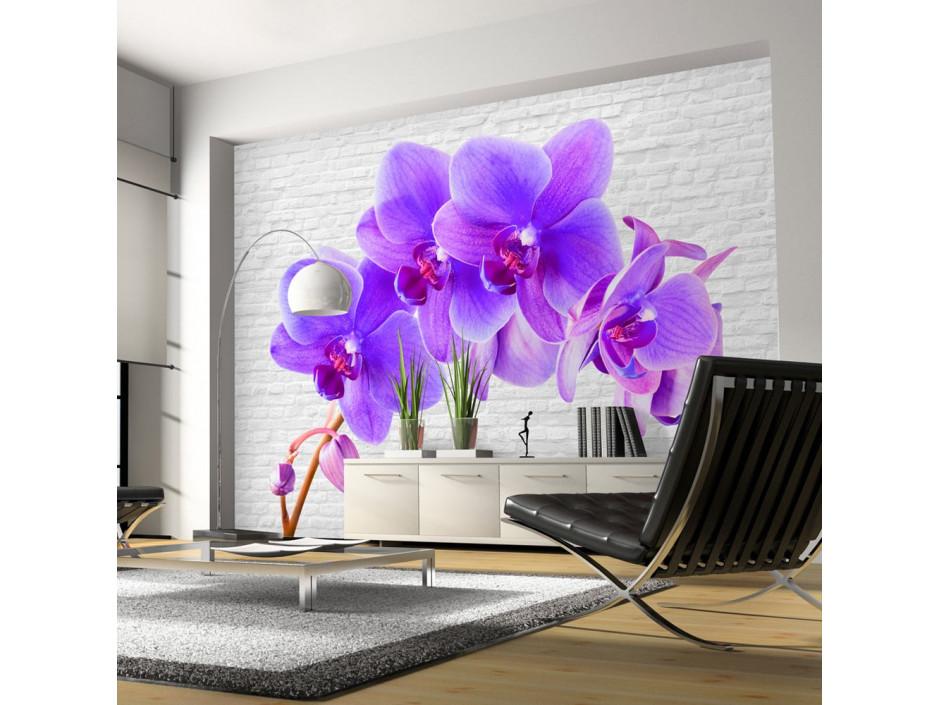 Papier peint - Violet excitation