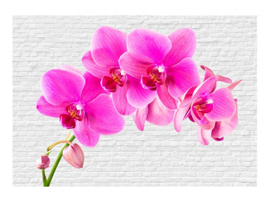 Papier peint  Pink excitation