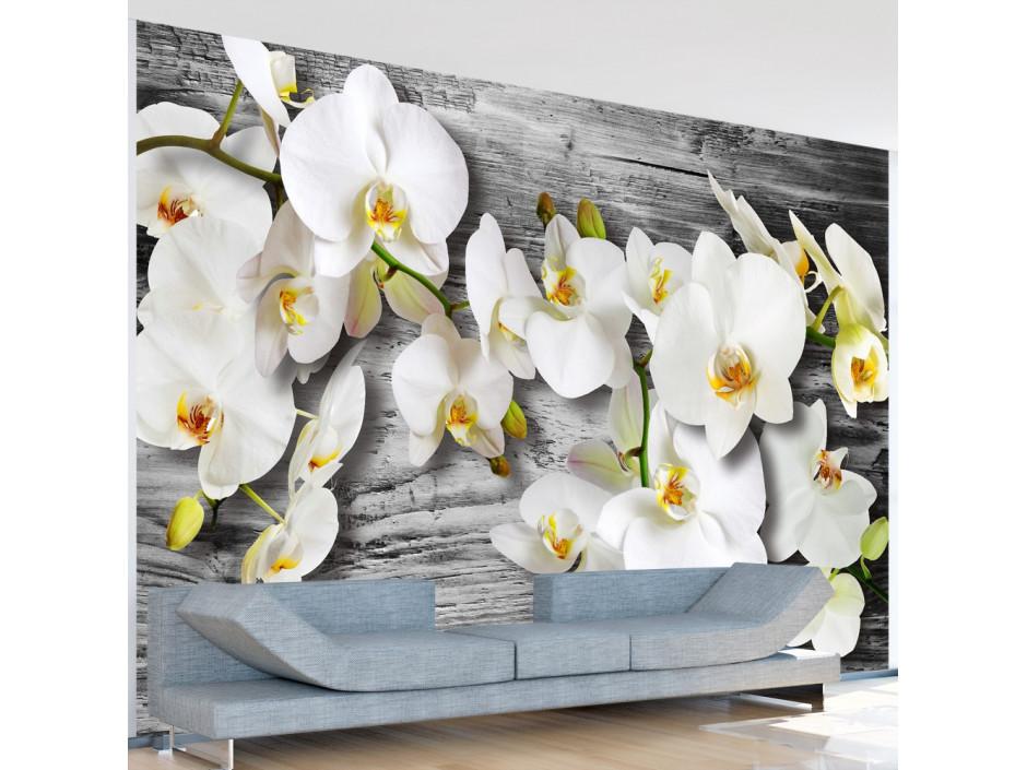 Papier peint - Callous orchids III