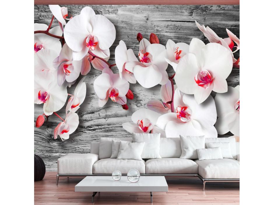 Papier peint - Callous orchids