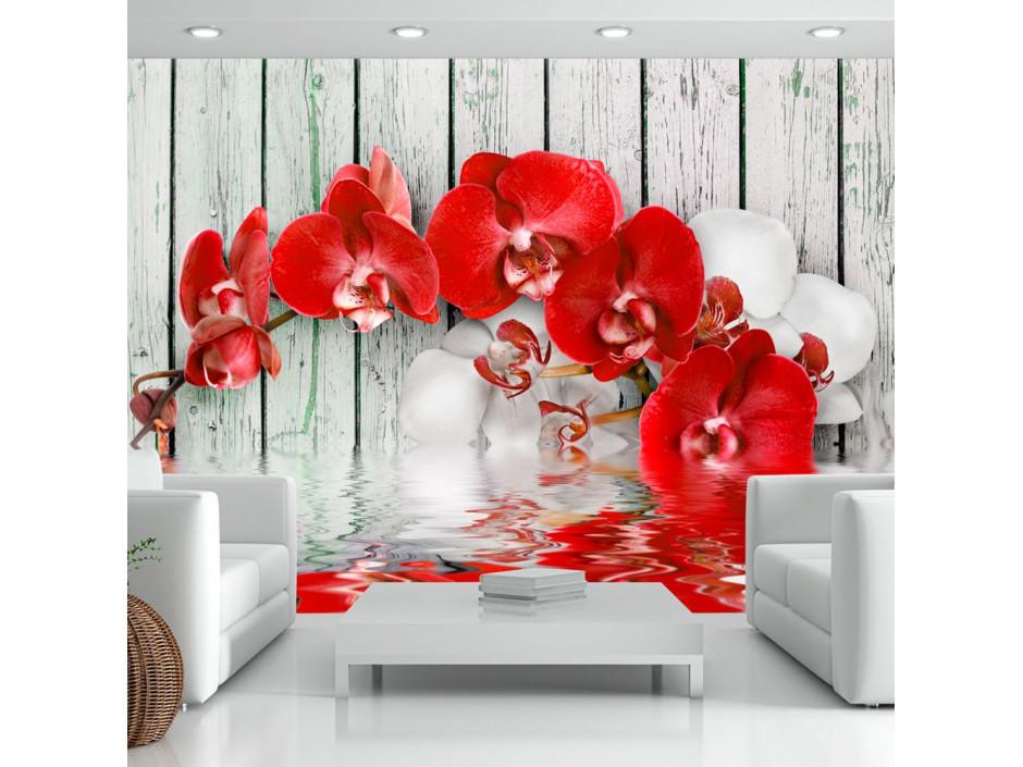 Papier peint - Ruby orchid