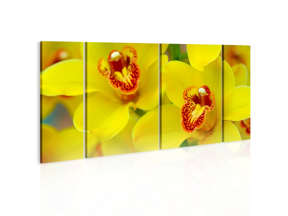 Tableau - Orchids - intensity of yellow color