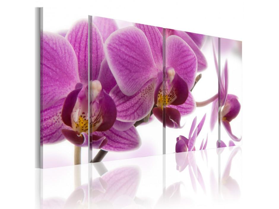 Tableau - Marvelous orchid