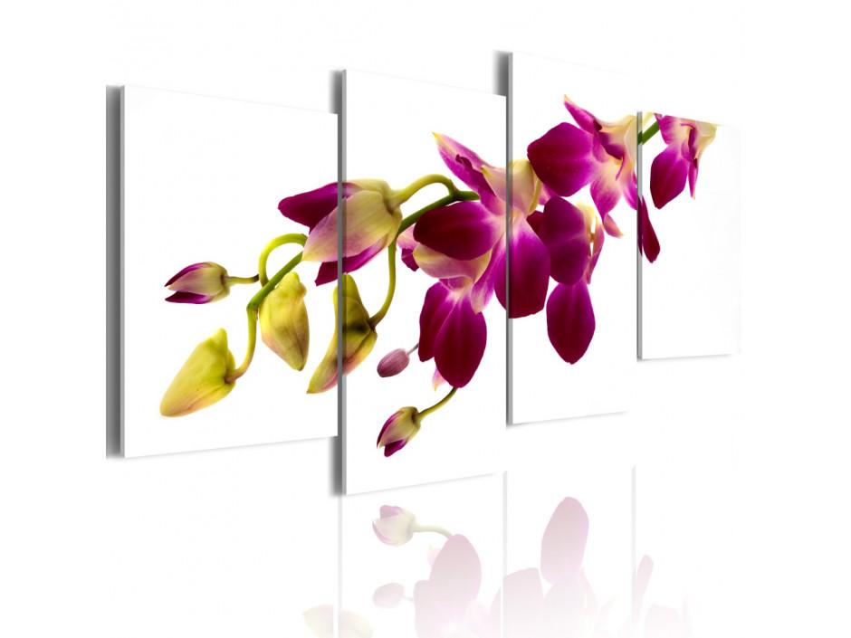 Tableau - Eclat d'une orchidée