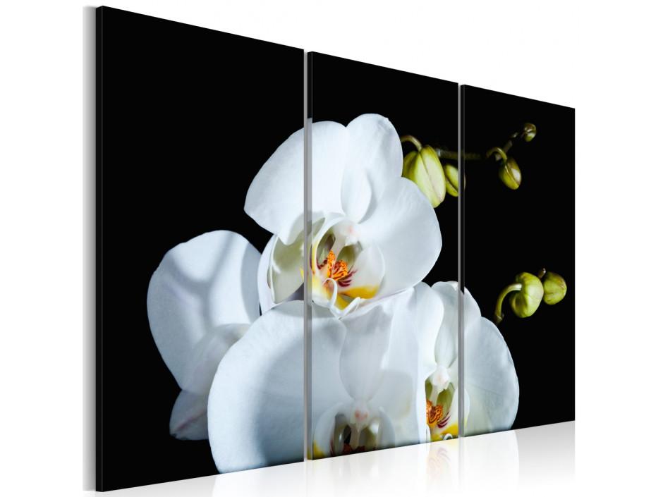 Tableau - Orchidée blanche comme neige