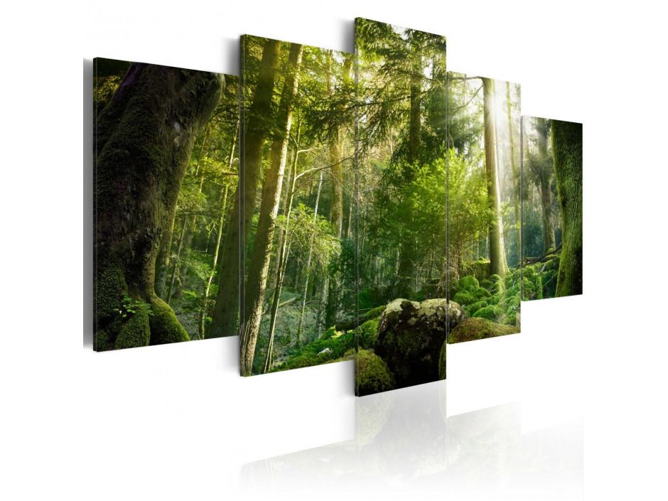 Tableau - Beauté de la forêt
