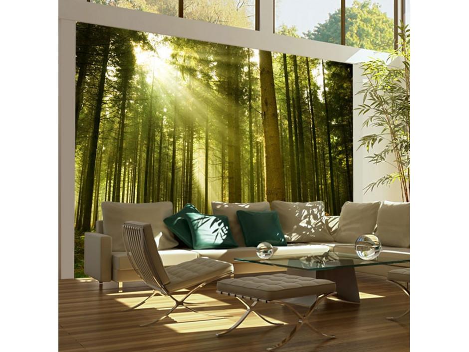 Papier peint  Forêt de pins