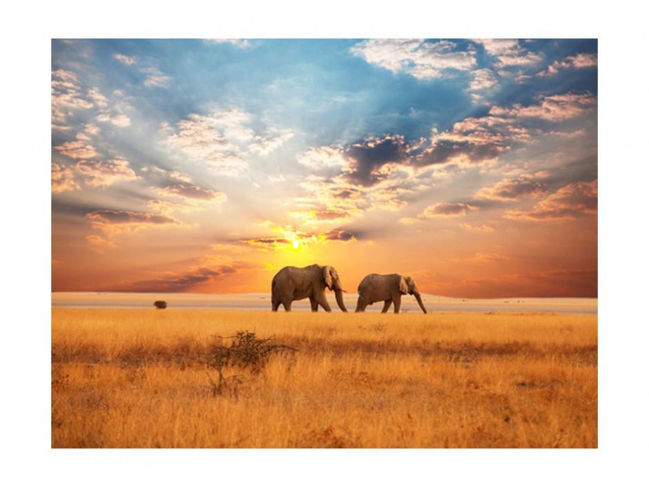 Papier peint  Éléphants de savane dAfrique