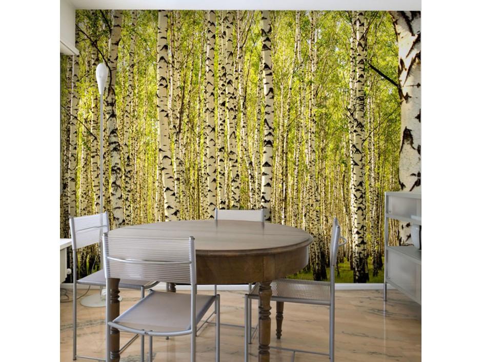 Papier peint  Forêt de bouleaux