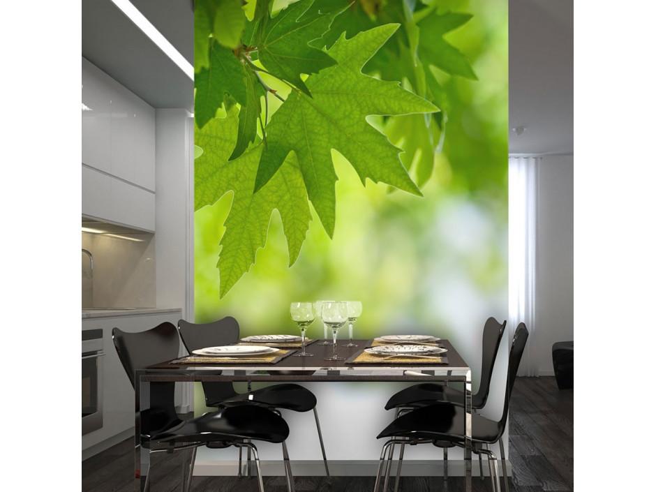 Papier peint - feuilles (Shallow focus)