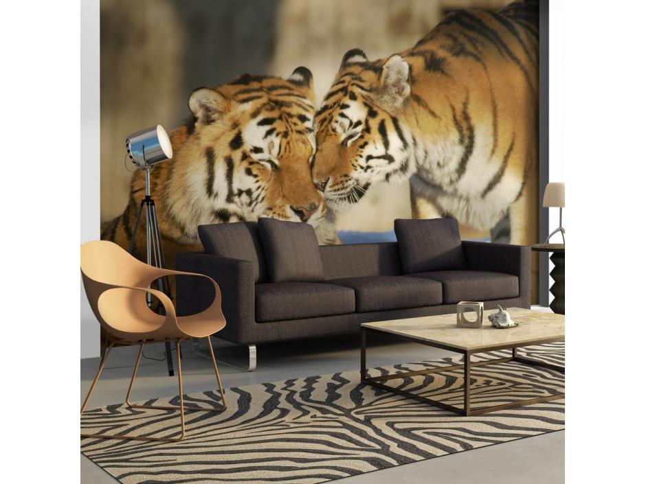 Papier peint  Tigres  lamour inconditionnel