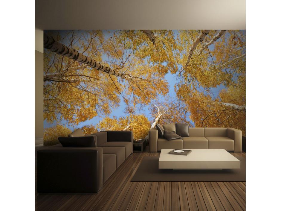 Papier peint - Arbres d'automne