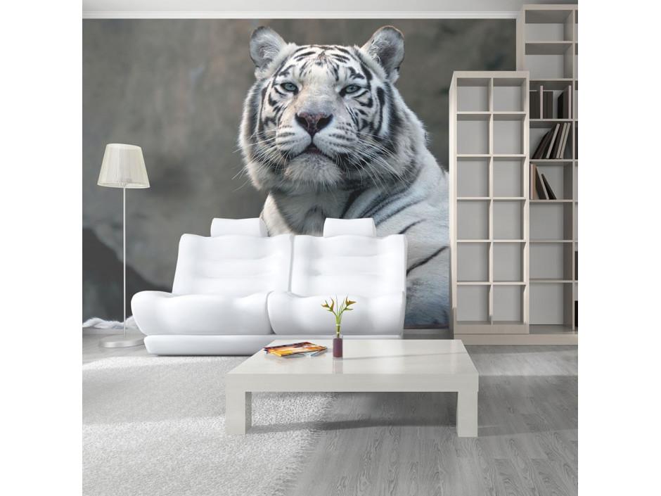 Papier peint  Tigre du Bengale au zoo