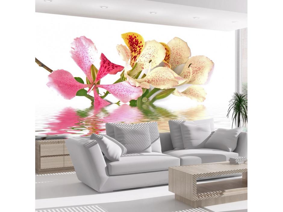 Papier peint  Fleurs tropicales  arbre aux orchidées (bauhinia)
