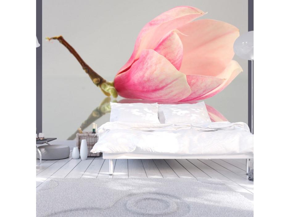 Papier peint - Fleur de magnolia solitaire