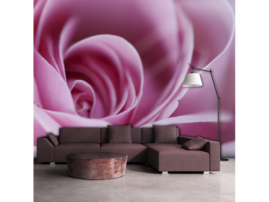 Papier peint - Rose rose