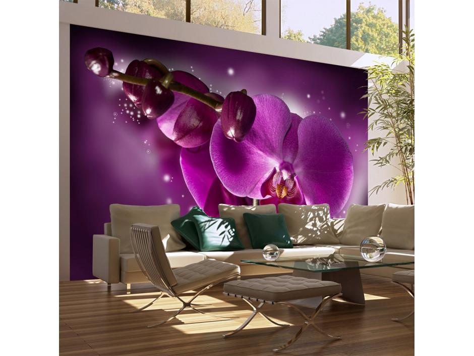 Papier peint  Conte et orchidée