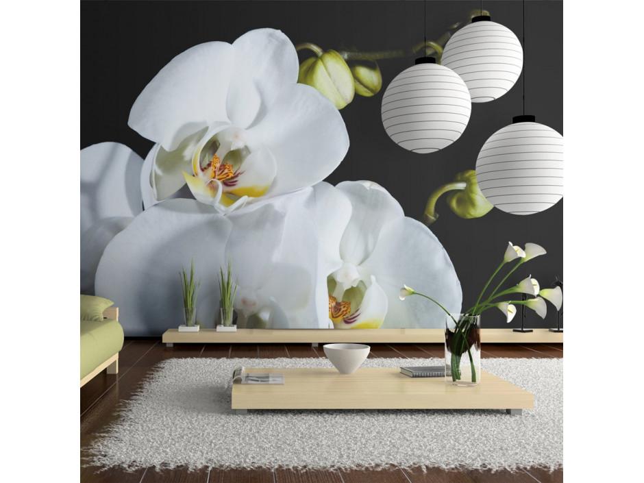 Papier peint  Phalaenopsis
