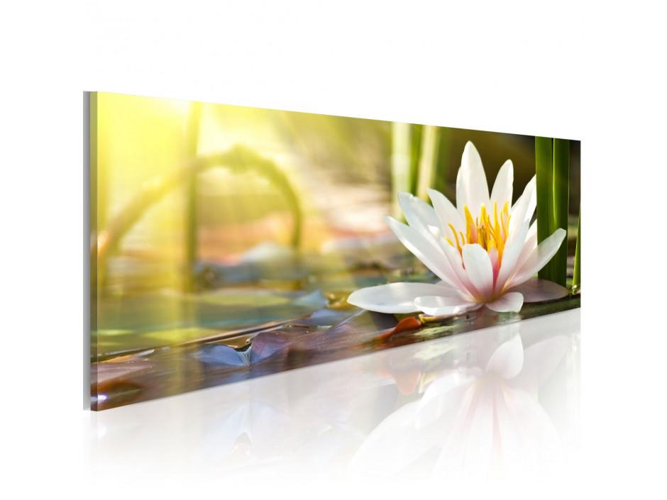 Tableau - Lotus' Glow