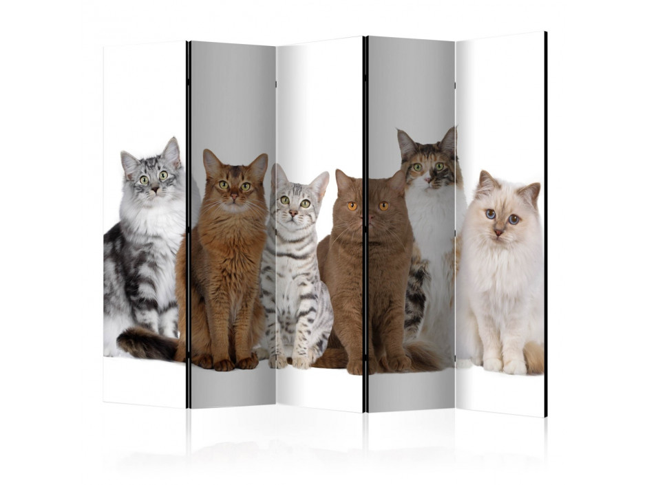 Paravent 5 volets Sweet Cats II [Room Dividers]