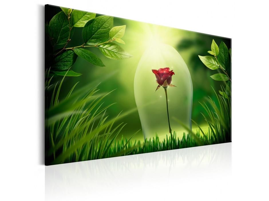Tableau  Magical Rose
